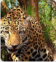 Cuiaba - Panatal - Brazil Tour